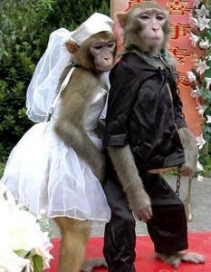 two-monkeys